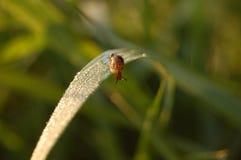 El caracol se arrastra en una hierba Imagen de archivo