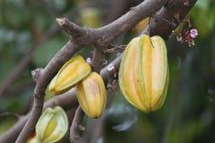 El Carambola o el starfruit es la fruta en Tailandia Foto de archivo libre de regalías