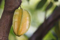 El Carambola o el starfruit es la fruta en Tailandia Imagenes de archivo