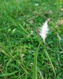 El caramelo de algodón de la naturaleza Imagen de archivo libre de regalías
