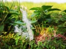 El caramelo de algodón de la naturaleza fotografía de archivo libre de regalías