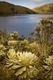El Анджел, экологический запас, Carchi, эквадор Стоковые Фото