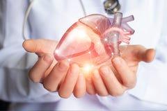 El cardiólogo apoya el corazón Imagen de archivo libre de regalías