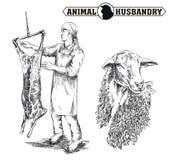 El carnicero cortó la res muerta de una oveja ilustración del vector