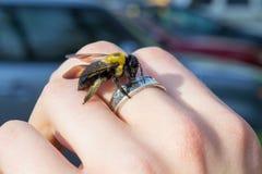 El carpintero manosea la abeja que se sienta en una mano Foto de archivo libre de regalías