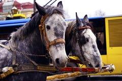 El carro con el caballo hermoso Imágenes de archivo libres de regalías