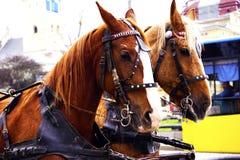El carro con el caballo hermoso Foto de archivo libre de regalías