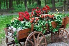 El carro con el geranio rojo del escarlata florece en parque Foto de archivo