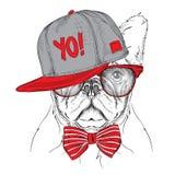 El cartel con el retrato del perro de la imagen en sombrero rojo y gris del hip-hop Ilustración del vector Fotos de archivo libres de regalías