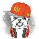 El cartel con el retrato del perro de la imagen en el ADN del sombrero del hip-hop con los auriculares Imagen de archivo libre de regalías