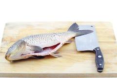 El caso de la tarjeta de pescados y del cuchillo imagen de archivo libre de regalías