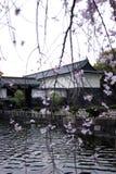 El castillo de Tokio con Cherry Blossoms imagenes de archivo