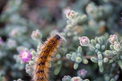 El ` Caterpillar de marzo del ` Imagen de archivo