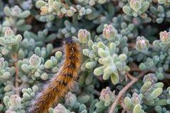 El ` Caterpillar de marzo del ` Fotos de archivo