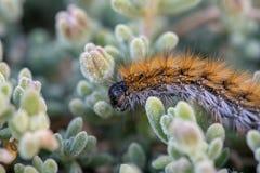 El ` Caterpillar de marzo del ` Imagen de archivo libre de regalías