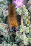 El ` Caterpillar de marzo del ` Foto de archivo libre de regalías