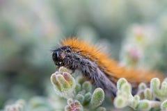 El ` Caterpillar de marzo del ` Imagenes de archivo