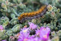 El ` Caterpillar de marzo del ` Imágenes de archivo libres de regalías