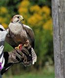 El cazador aviar imágenes de archivo libres de regalías