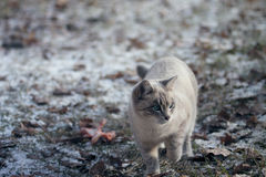 El cazador de ojos azules Foto de archivo libre de regalías