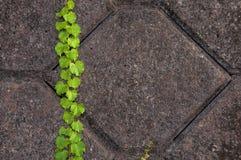 El cemento diseña el fondo Foto de archivo