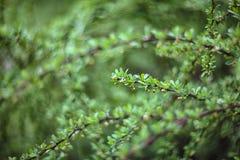 El centelleo enciende la primavera borrosa color vivo del bokeh de la parte posterior de la hoja Fotografía de archivo