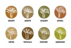 El centeno de la cebada del trigo de los cereales deletreó verdes de la avena ilustración del vector