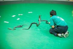 El centro de investigación tailandés de la serpiente muestra a serpientes el funcionamiento Pasillo Imagen de archivo libre de regalías