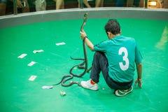 El centro de investigación tailandés de la serpiente muestra a serpientes el funcionamiento Pasillo Imagenes de archivo