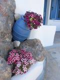 el centro turístico en el Bodrum, flores del pavo en el concepto del cubo Foto de archivo