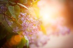 El cepillo de la lila púrpura hermosa florece con las hojas fotografía de archivo libre de regalías