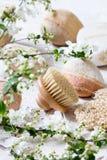 El cepillo del cuerpo y la primavera hermosa florece para lavarse natural para arriba Foto de archivo libre de regalías