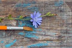 El cepillo y la achicoria florecen en el viejo tablero de madera Fotografía de archivo libre de regalías