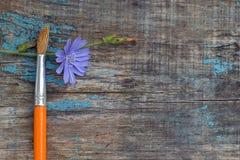 El cepillo y la achicoria florecen en el viejo tablero de madera Foto de archivo