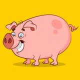 El cerdo más divertido Fotografía de archivo libre de regalías