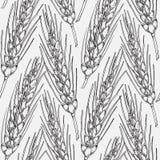 El cereal cosecha bosquejos Fotografía de archivo libre de regalías