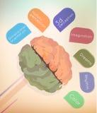 El cerebro Imagen de archivo libre de regalías