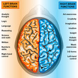 El cerebro humano a la izquierda e a la derecha funciona Imágenes de archivo libres de regalías
