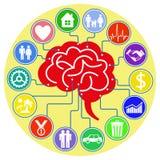 El cerebro humano y sus pensamientos Imagen de archivo libre de regalías