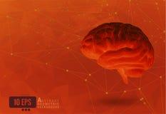 El cerebro polivinílico bajo en extracto conecta los puntos BG anaranjada ilustración del vector