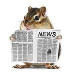 El chipmunk divertido leyó el periódico Fotos de archivo