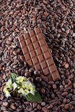 Chocolate con leche en granos de cacao Foto de archivo
