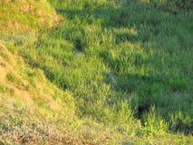 El chorrito fue crecido demasiado con la hierba foto de archivo