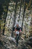 El ciclista ascendente del corredor en fondo es un bosque del abedul Imagenes de archivo