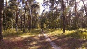 El ciclista del hombre monta las trayectorias de bosque almacen de video