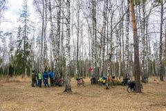El ciclo en un bosque del abedul no lejos de Ivanov Imágenes de archivo libres de regalías
