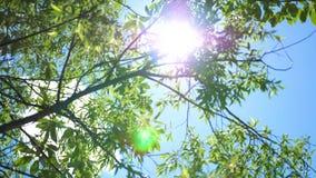 El cielo azul, los rayos del ` s del sol pasa a través de la corona del árbol almacen de video