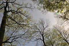 el cielo azul, nubes, árbol ramifica, la distancia, primavera, esperanza, esperanza Fotos de archivo libres de regalías