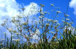El cielo azul se cubre con las nubes gruesas Las plantas están esperando una tempestad de truenos Imagenes de archivo