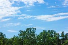 El cielo azul sobre los árboles verdes en el bosque Foto de archivo libre de regalías